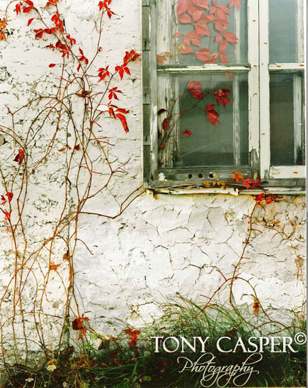 Red Ivy Window